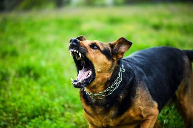 A Halifax municipal councillor says the city needs a new approach to dealing with dangerous dogs. (The Len/Shutterstock - image credit)