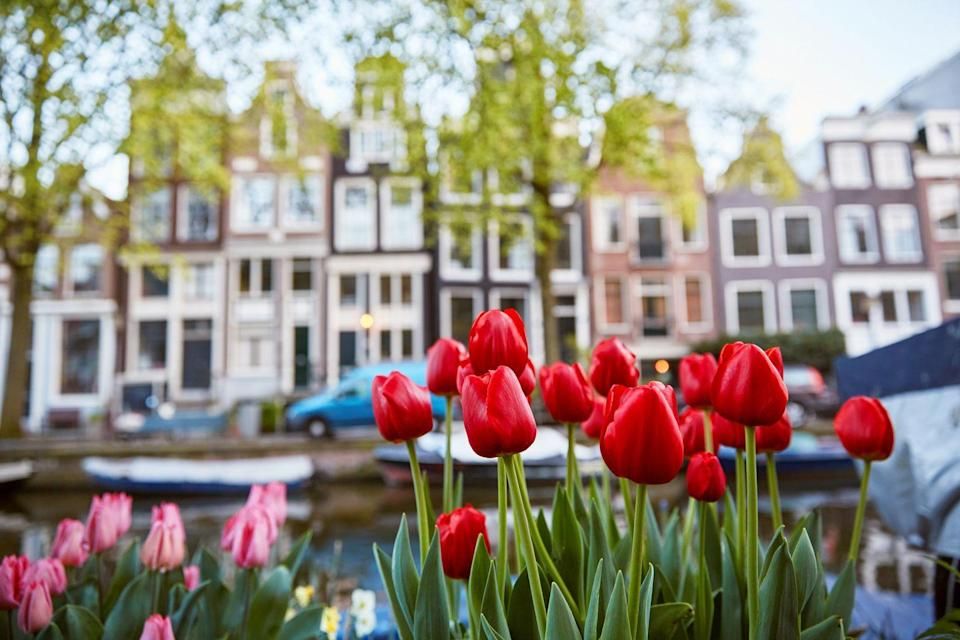 <p>Tulips in front of the dancing houses</p>