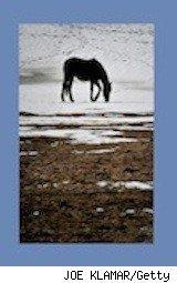 a horse out to pasture - horse charity, facebook