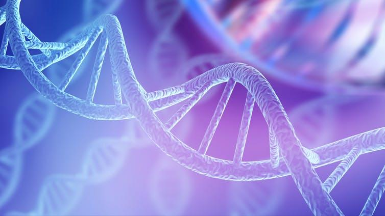 """<span class=""""caption"""">DNA methylation is the addition of methyl groups to a DNA molecule.</span> <span class=""""attribution""""><span class=""""source"""">Billion Photos/Shutterstock</span></span>"""