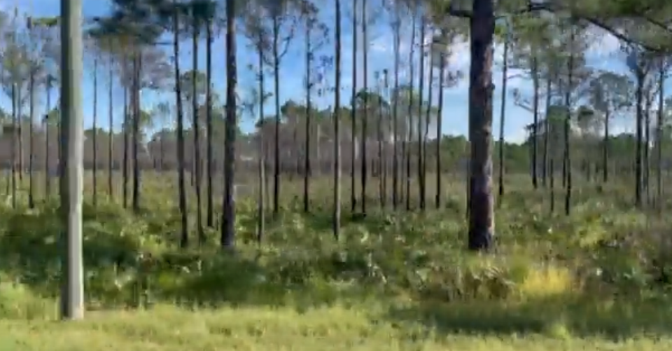 A view of the Florida swampland where investigators are searching for Brian Laundrie (Twitter.com/JoshTaylorPIO)