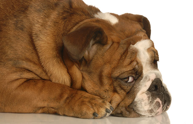 File photo of guilty dog (Thinkstock)