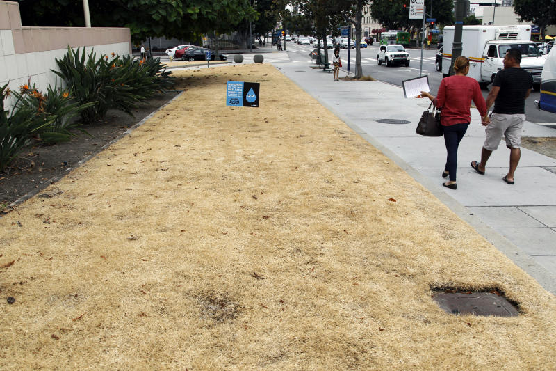 FILE - This Sept. 3, 2015, file photo shows a dried-out lawn at Los Angeles City Hall, with a sign explaining that irrigation has been shut off due to the ongoing drought. California water managers will vote Tuesday, Feb. 20, 2018, whether to reinstate some water restrictions and conservation campaigns and make them permanent, as a year with no almost no rain plunges Southern California back into drought and sends water use there climbing to levels above those of the state's historic 2013-2017 drought. (AP Photo/Nick Ut, File)