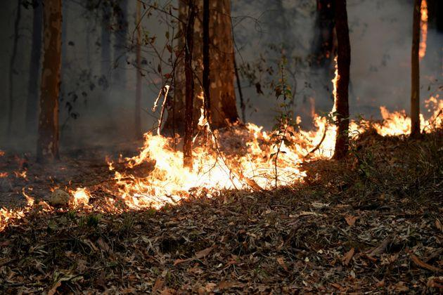 Bushfires in Australia are expected to add to rising levels of carbon dioxide in 2020