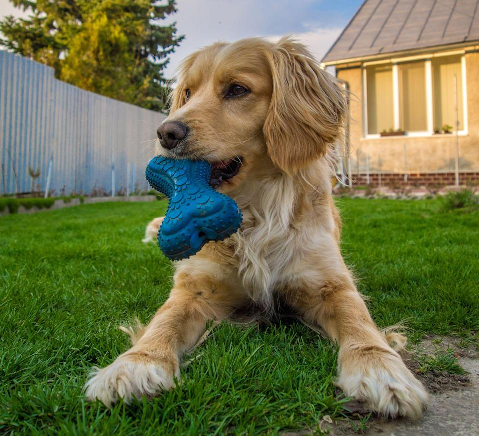 """<p>We've all been there, spending tons of money on dog toys, only to find them shredded within minutes. We replace them with something we think looks sturdier, only to find that destroyed, too. From <a href=""""https://www.womansday.com/life/pet-care/g26763903/most-indestructible-dog-toys/"""" rel=""""nofollow noopener"""" target=""""_blank"""" data-ylk=""""slk:indestructible chew toys"""" class=""""link rapid-noclick-resp"""">indestructible chew toys</a> to <a href=""""https://www.womansday.com/life/pet-care/g33338799/indoor-dog-games/"""" rel=""""nofollow noopener"""" target=""""_blank"""" data-ylk=""""slk:indoor dog games"""" class=""""link rapid-noclick-resp"""">indoor dog games</a>, the toy market is regularly coming out with new creations to entice your furry friend. But how do we find the toy that will actually last? The choice is hard—and it doesn't just end with toys. If you've ever walked through a pet store, you may be wondering how to decide between the countless harnesses, taste deterrents, treats and more. </p><p>Luckily, we can rely on other dog owners' reviews to guide us in the right direction for pet products. Pet parents want the best for their dogs, and the numbers don't lie. According to the American Pet Products Association, <a href=""""https://www.americanpetproducts.org/press_industrytrends.asp"""" rel=""""nofollow noopener"""" target=""""_blank"""" data-ylk=""""slk:U.S. pet owners spent $103 billion on their pets in 2020."""" class=""""link rapid-noclick-resp"""">U.S. pet owners spent $103 billion on their pets in 2020.</a> That number doubled in the past 10 years, so the trend isn't slowing down. While many people spent the majority of the past year at home with their dog (or <a href=""""https://www.womansday.com/life/pet-care/a32600443/how-to-adopt-a-dog/"""" rel=""""nofollow noopener"""" target=""""_blank"""" data-ylk=""""slk:newly adopted pet"""" class=""""link rapid-noclick-resp"""">newly adopted pet</a>), not only have they bonded, but they've invested in new pet products. </p><p>With more dog parks open, try spending more time outside with your dog to """