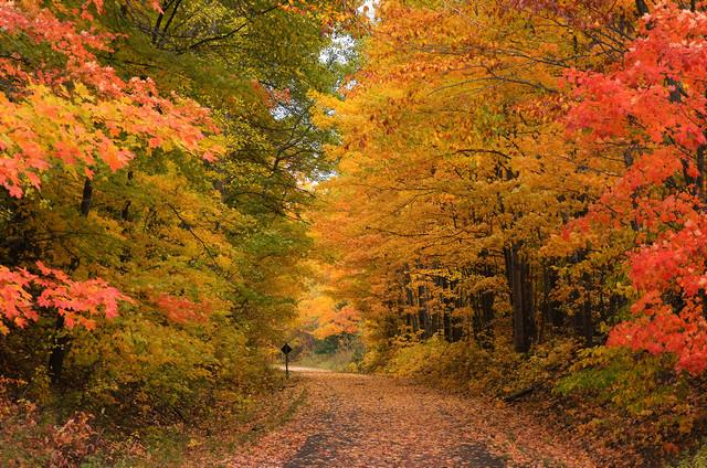 best state for fall photography sherry johnston michigan