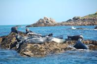 """<p>As Britain's most southerly point, the residents of the Isles of Scilly are blessed with warmer weather than most of us, and the islands are a hotspot for rare birds, who stop off there as they migrate south for winter, as well as other incredible wildlife - whales can be spotted off the isles' shores.</p><p>Alongside their reputation for fascinating creatures, the Scillies have some amazing man-made green spaces too, like Tresco's Abbey Gardens, home to 20,000 plants from over 80 countries and described as 'a Perennial Kew without the glass'. </p><p>There's also wonderful restaurants to try there, and you can enjoy magnificent views on walks along the beautiful coastline or on boat trips between the islands.</p><p>Join naturalist, author and popular local guide Will Wagstaff on a tour from April to September 2022.</p><p><a class=""""link rapid-noclick-resp"""" href=""""https://www.goodhousekeepingholidays.com/tours/isles-of-scilly-will-wagstaff"""" rel=""""nofollow noopener"""" target=""""_blank"""" data-ylk=""""slk:FIND OUT MORE"""">FIND OUT MORE</a><br></p>"""