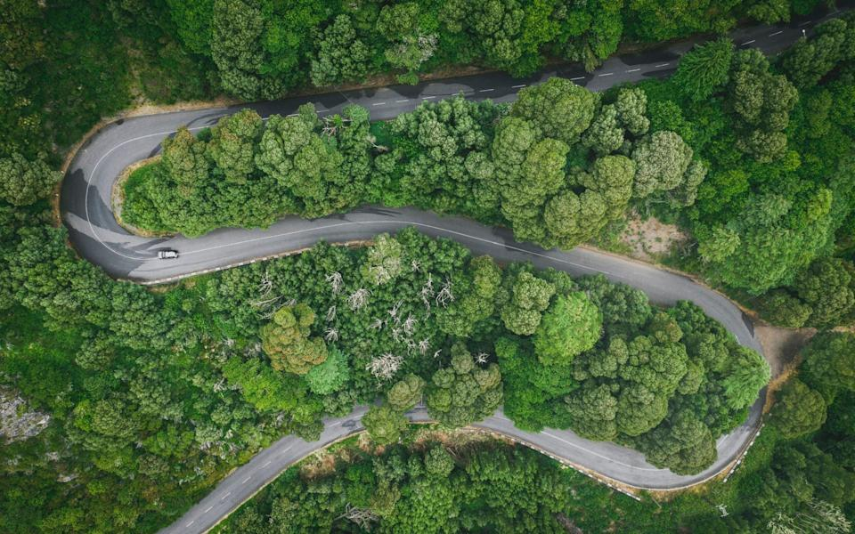 Aerial view of Laurisilva Forest in Madeira - Getty