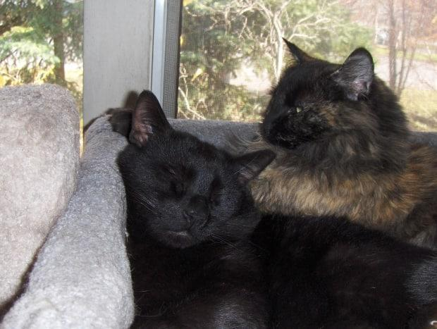 Noir and fellow rescue Spice cuddle in the MacDonell's Prince George home