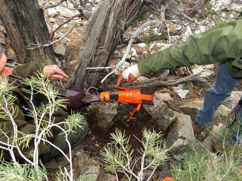 FILE - This image provided by the Great Basin National Park shows a Winchester Model 1873 rifle found in Nevada. The gun made in 1882 was found propped against a juniper tree in Great Basin National Park in November during an archaeological survey. Park spokeswoman Nichole Andler says officials may never know how long the rifle had been standing there, but it's possible it had been left there in the 1880s. (Great Basin National Park via AP, File)
