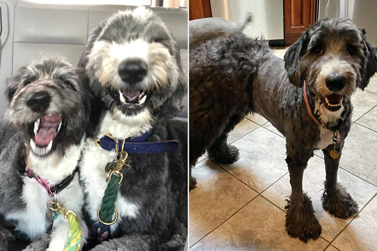 "<p>""On April 2, 2020, my friend Lisa Cohen posted a picture on FB of the pandemic haircut she'd given her dog, Lilli. Poor Lilli's tail looked like it had been run over by a lawnmower,"" Shelley Ross told PEOPLE about her first brush with the trend of pandemic dog haircuts. ""I thought, with groomers also in lockdown, this must be happening all over the world. It was.""</p> <p>Ross started to reach out to other dog owners to ask about their grooming experiences, and got plenty of adorable photos in return, like these shots of Henry who was trimmed into a pair of pants. </p>"
