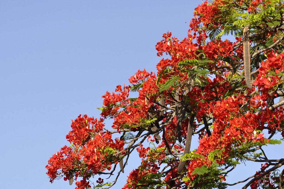 Trees of Bangalore