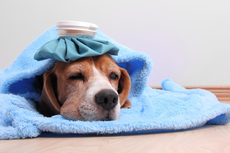 How to Protect Your Pup from the Dreaded Dog Flu This Season