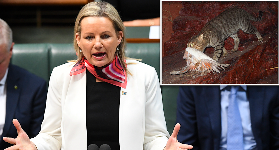 Australia's environment minister is confronted by invasive species. Source: AAP