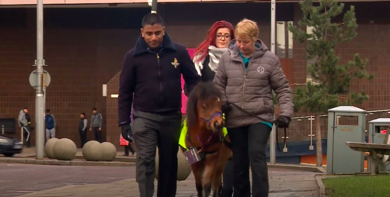 Visually impaired man receives the UK's first ever guide HORSE