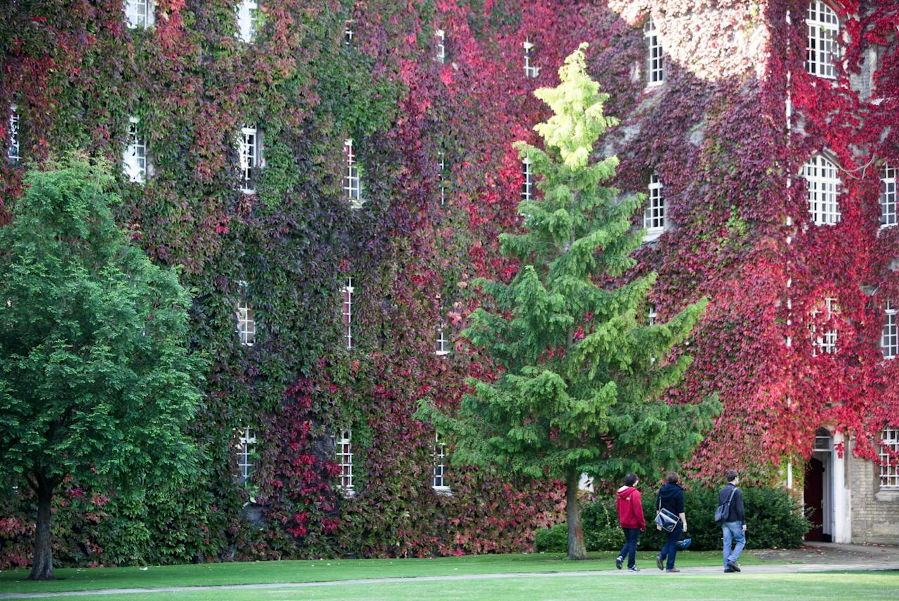 The largest wall of Virginia Creeper in Britain is turning a blaze of red as the mild weather sees this year's autumn leaves produce some spectacular colours at St John's College, Cambridge. The vine, which climbs 10 metres high to the top of the four-storey building and is 60 metres wide, has become one of the most famous autumn sights in the University city. (Rex)
