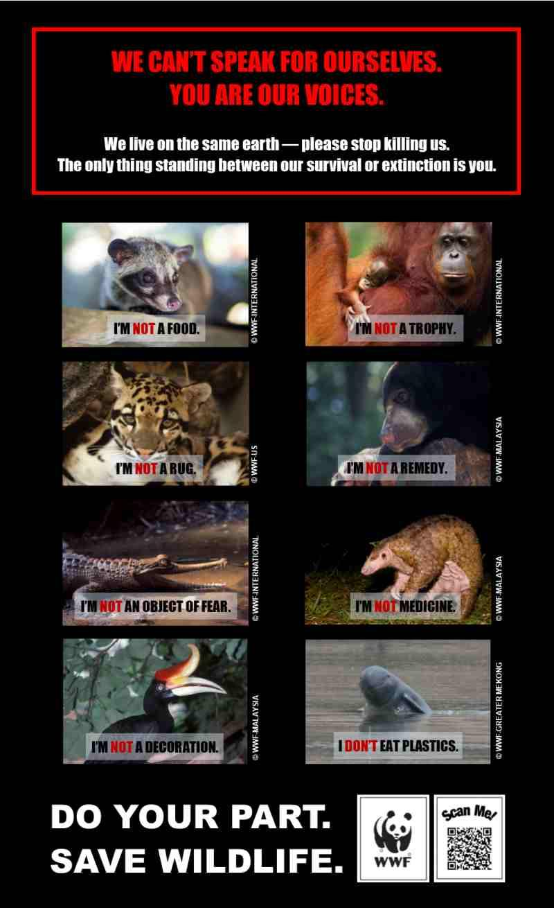 A poster of protected animals species asking people not to eat them, May 24, 2019. ― Picture courtesy of Sarawak WWF-Malaysia