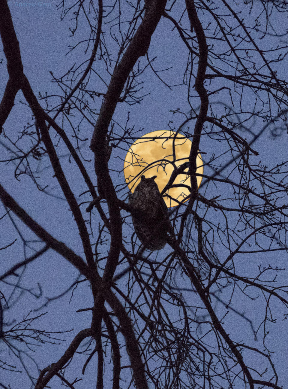 <em>Supermoon – a supermoon is when the moon looks bigger and bright because of its closeness to the earth (Picture: AP</em>