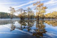 """<p>Paddle out to <a href=""""https://tpwd.texas.gov/state-parks/caddo-lake"""" rel=""""nofollow noopener"""" target=""""_blank"""" data-ylk=""""slk:Caddo Lake"""" class=""""link rapid-noclick-resp"""">Caddo Lake</a>: Mystery seems to shroud its 27,000 acres, where Spanish moss hangs like drapery from tree limbs in the world's largest cypress forest. This lake is an interconnected maze of bayous, swampy marshes, and backwaters. (Beer boats hid out here during Prohibition.) Alligators lurk under barely-submerged tree roots, frogs pull up on lily pads, and the only way to appreciate Caddo Lake's primordial beauty is by boat or canoe.</p>"""