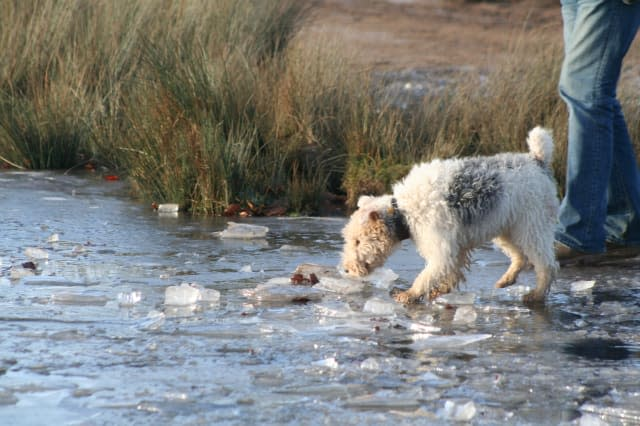 Public warned not to jump in lakes to save dogs
