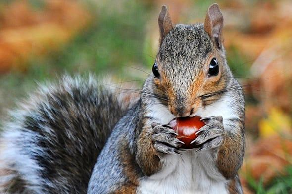 Are you a squanderer or a squireller?