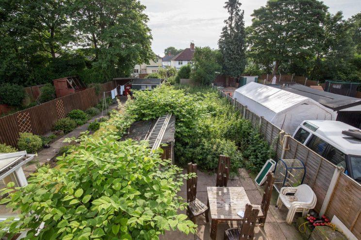 Christopher and Marie Moore's garden has been taken over by the knotweed (Caters)