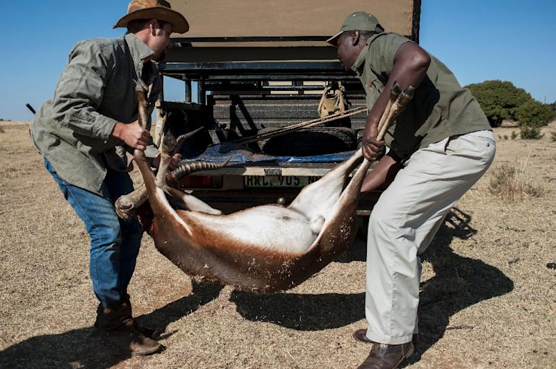 Professional hunter Tavi Fragoso (R) and a staff member of Iwamanzi Game Reserve in the North West Province load the carcass of a hunted antelope onto the back of a vehicle at the Iwamanzi Game Reserve in Koster on June 6, 2015 (AFP Photo/Stefan Heunis)
