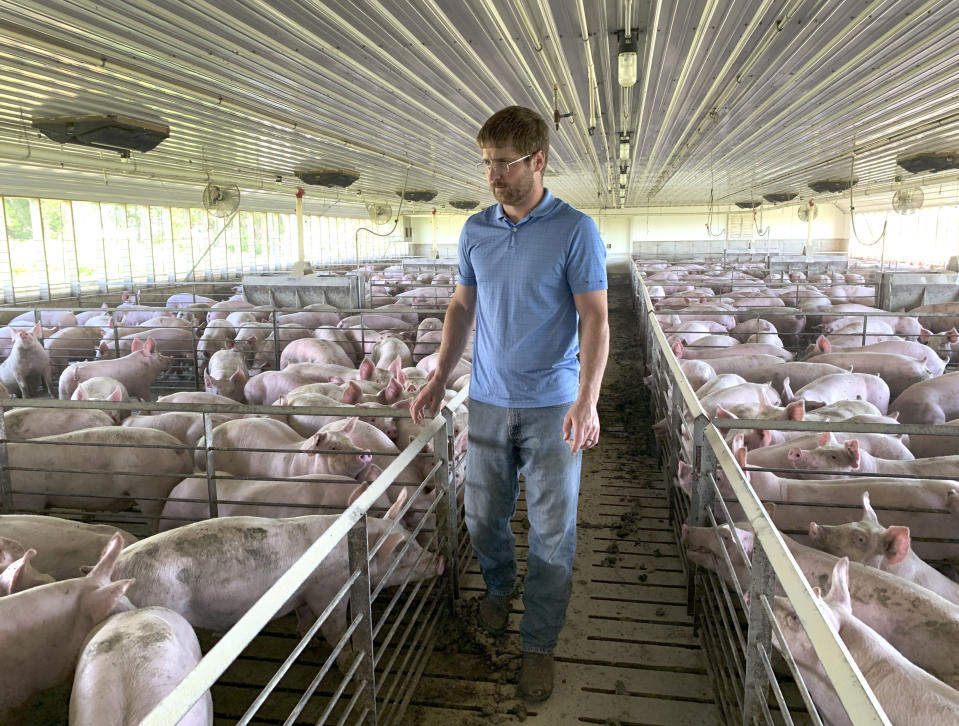 FILE - In this Tuesday, June 25, 2019, file photo, farmer Matthew Keller walks through one of his pig barns near Kenyon, Minn. President Donald Trump spent four years upending seven decades of American trade policy. He started a trade war with China, slammed America's closest allies by taxing their steel and aluminum and terrified Big Business by threatening to take a wrecking ball to $1.4 trillion in annual trade with Mexico and Canada. Trump's legacy on trade is likely to linger, regardless whether Joe Biden replaces him in the White House in January 2021. (AP Photo/Jeff Baenen)