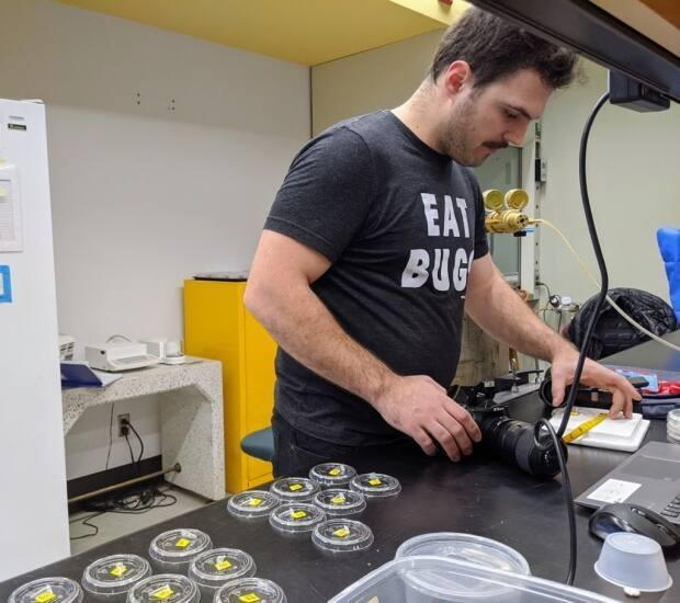 PhD researcher Matt Muzzatti in his Carleton University lab, before COVID-19 restrictions obliged him to move his insect experiment into his home.