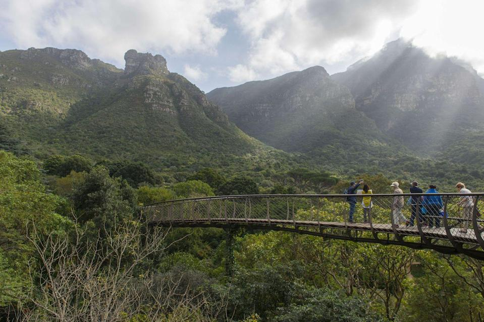 "<p>Located at the slope of Table Mountain, <a href=""https://www.sanbi.org/gardens/kirstenbosch/"" rel=""nofollow noopener"" target=""_blank"" data-ylk=""slk:Kirstenbosch National Botanical Garden"" class=""link rapid-noclick-resp"">Kirstenbosch National Botanical Garden</a> became the first botanic garden in the world committed to native flora in 1913. One of the main attractions, the steel and timber canopy walkway winds through and over the trees of the Arboretum while offering serene views of the surrounding mountains and Cape Flats. Kirstenbosch also houses an expansive conservatory that exhibits plants indigenous to different biomes of South Africa including savanna, fynbos, and karoo.<br></p>"