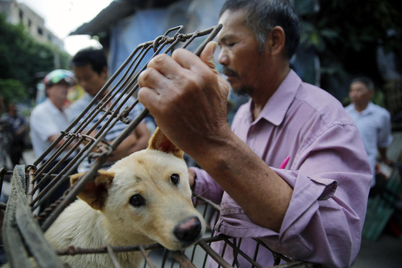 A vendor waits for buyers as he closes a cage with a dog for sale at a market in Yulin city, southern China's Guangxi province, June 20, 2016. (EPA/WU HONG)
