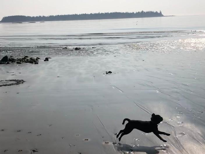 a dog running on the sand at the beach