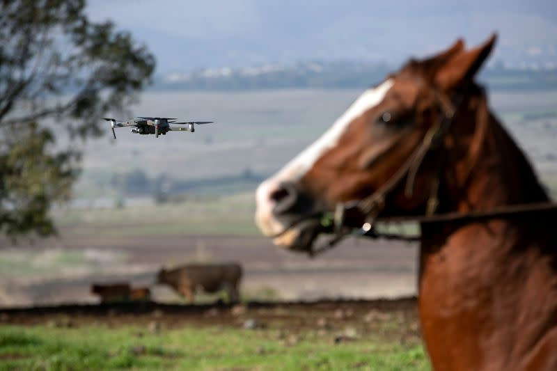Droves by drone: Israeli cow-herders turn to flying tech to boost efficiency