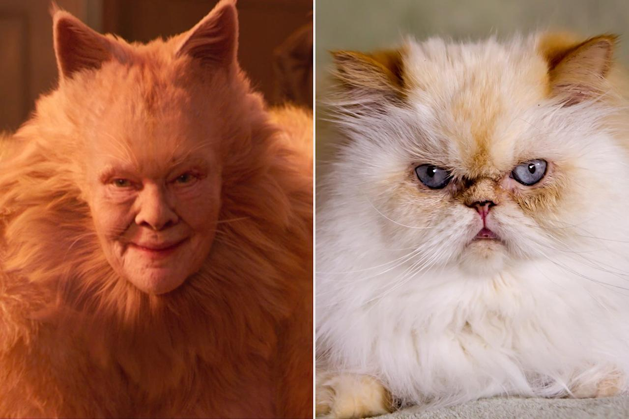 Dench is an Academy Award-winning actress and this cat was once nominated for anA-<em>Cat-</em>demy Award for Lead Cat-ress in a Musical.