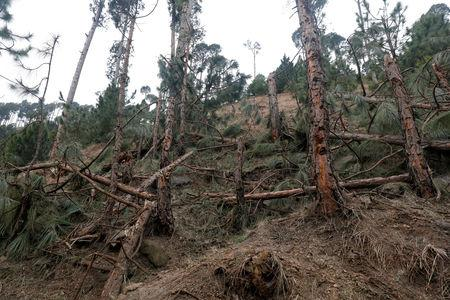 A general view of the damaged trees, after Indian military aircrafts struck on February 26, according to Pakistani officials, in Jaba village, near Balakot, Pakistan, March 7, 2019. REUTERS/Akhtar Soomro