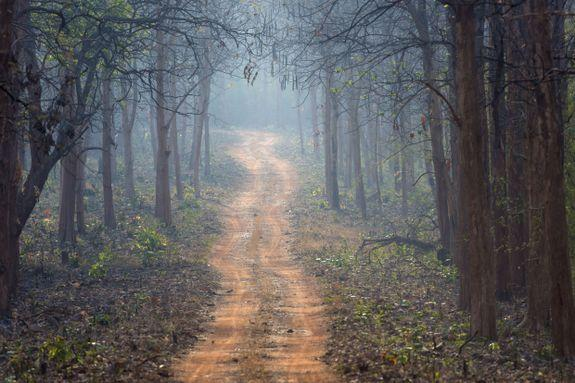 A track through forested tiger country in Tadoba National Park, Maharashtra, India