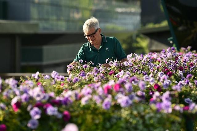 Wimbledon gardener Christopher McCarron puts the finishing touches to a display at The All England Club (AFP Photo/Glyn KIRK )