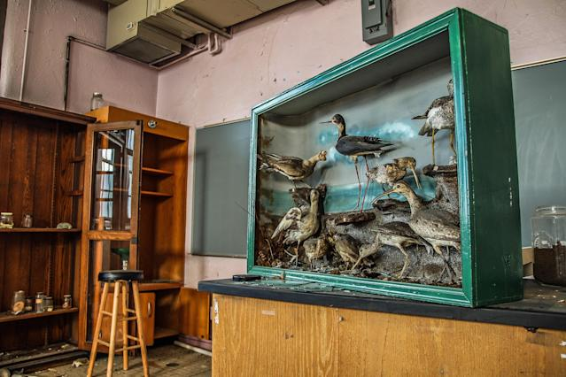 <p>A taxidermy cabinet still looking pristine and almost untouched. (Photo: Leland Kent/Caters News) </p>