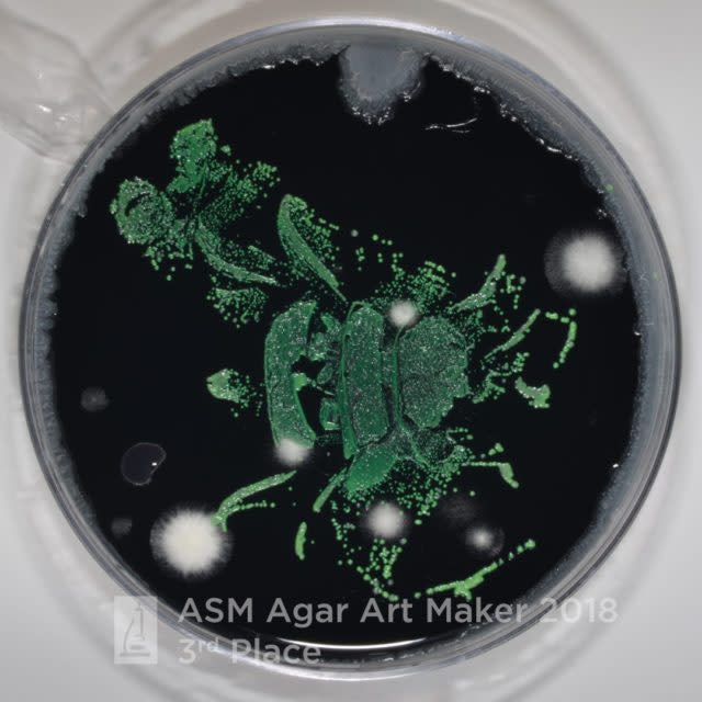 A Bumble bee, bacteria and mold: Could this be art in the making?