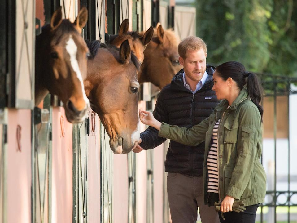 Harry and Meghan horses