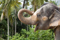 17. The only animals in the world that have chins are human beings and elephants.