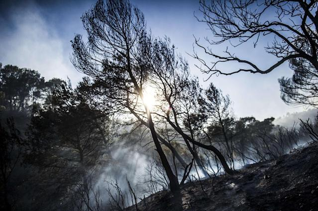 <p>A forest fire in the Luberon has ravaged more than 800 hectares between Pertuis and Mirabeau in the Vaucluse, July 25, 2017. (Lilian Auffret/SIPA/REX/Shutterstock) </p>