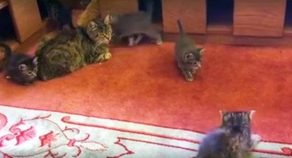Stray kittens play in the Aziz Mahmud Hüdayi Mosque in Istanbul, Turkey in this image taken from video. [Mustafa Efe/Facebook]