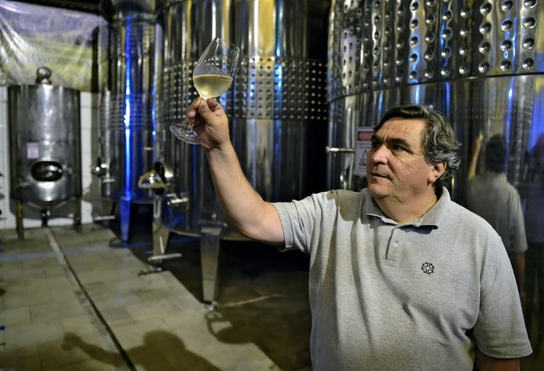 Wine expert Carlos Abarzua examines a glass of white wine at the Familia Geisse vineyard in Pinto Bandeira in southern Brazil, a region gaining a reputation for high-quality sparkling wine
