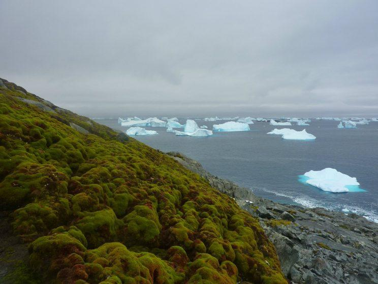 Green Island moss bank with icebergs. SWNS