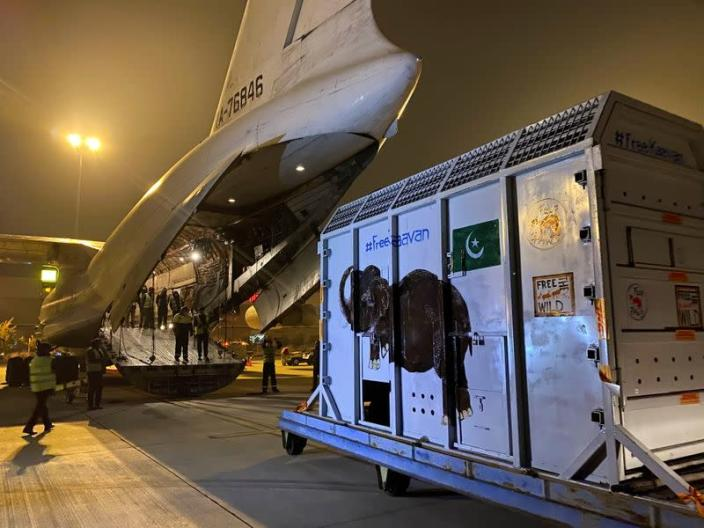 A crate carrying Kaavan, an elephant to be transported to a sanctuary in Cambodia, is seen at the Islamabad International Airport in Islamabad