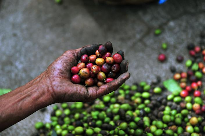 Brazil's 290,000 growers produce around a third of the world's coffee, out-producing the country's nearest competitor, Vietnam, by more than three times (AFP Photo/Hector Retamal)