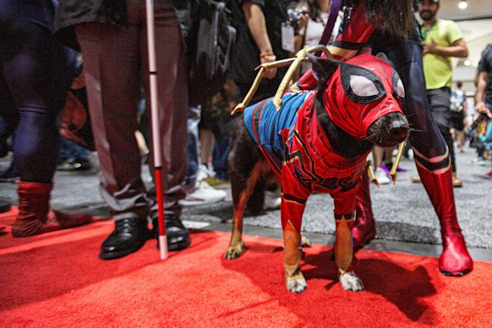 A dog dressed as Spider-Man.