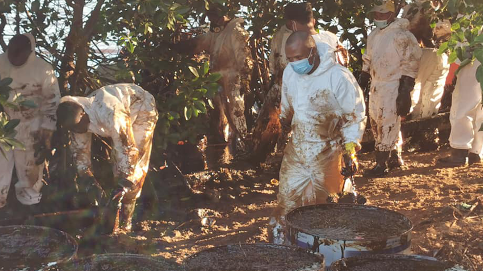Workers in PPE work to clean the mangroves. Oil filled barrels in foreground.