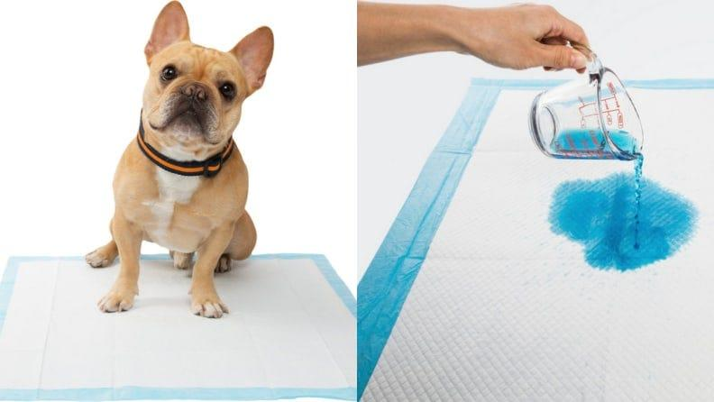 Pee pads are a must-have if your foster dog needs potty training help.